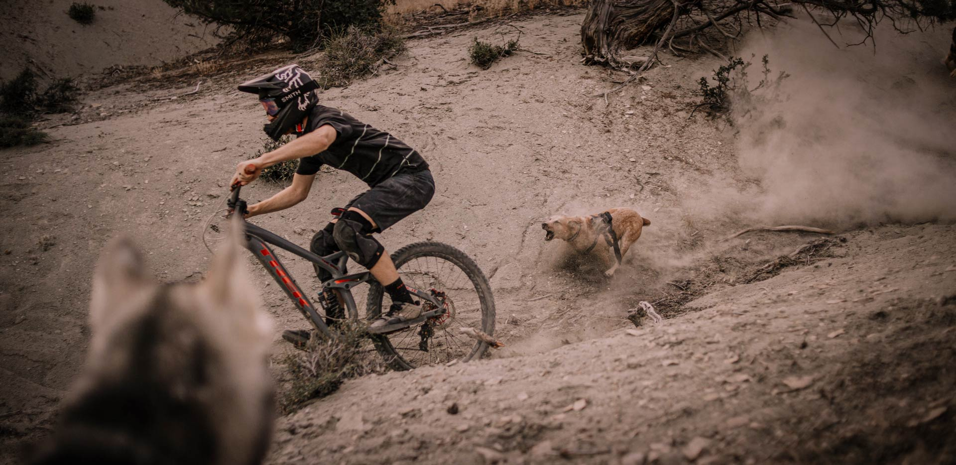Tannus - Trail Dog Shred