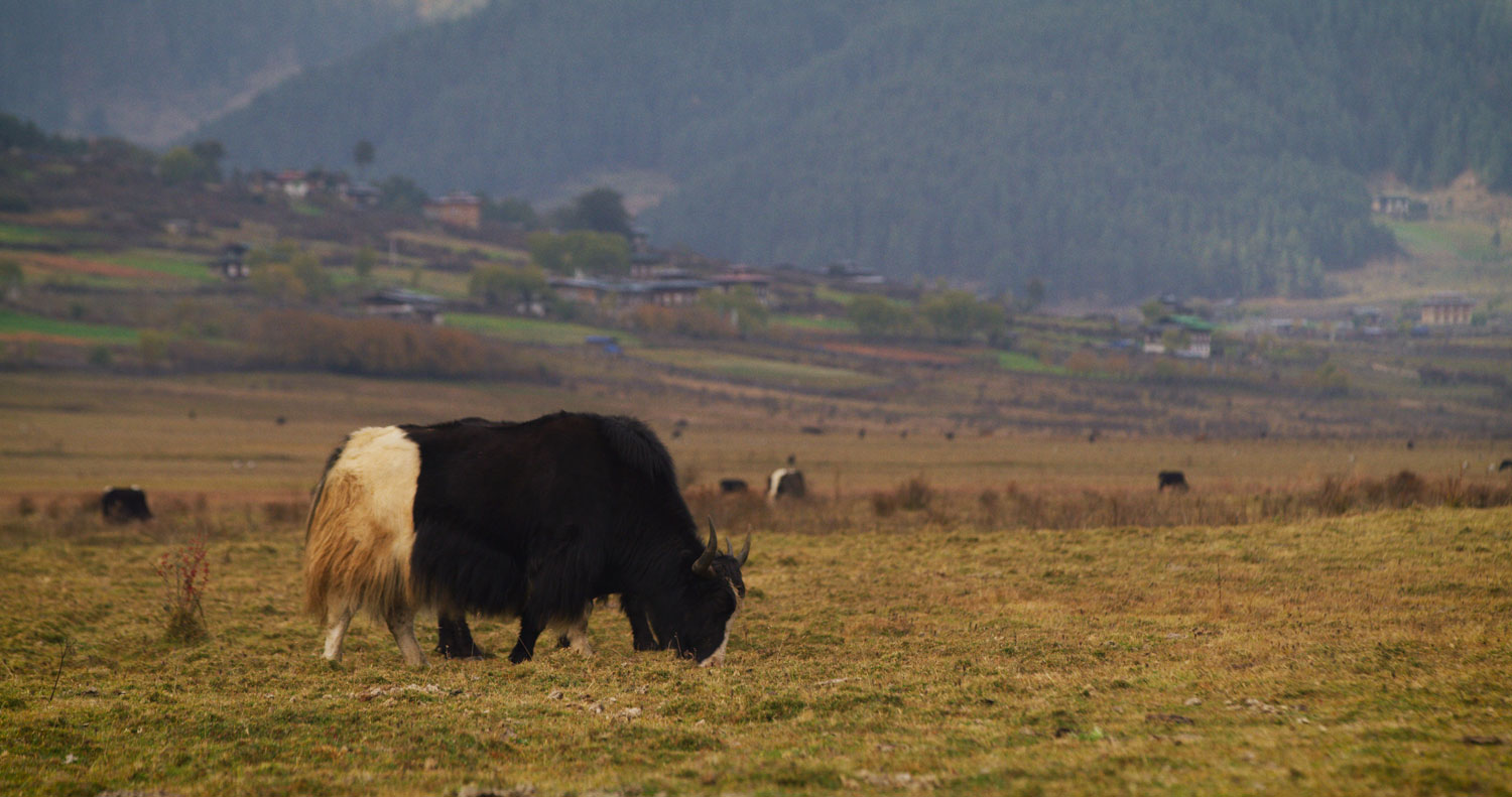 Madman Trails of Bhutan
