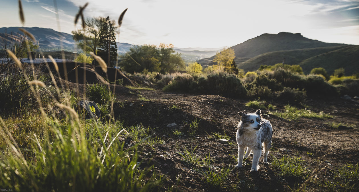 """Lola """"The Trail Boss"""" let's the neighborhood know it's time to ride. Photo: Ryan Cleek"""